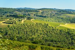 Vineyard in Passignano in Chianti region. Tuscany. Italy. Vineyard in Passignano in Chianti region. Tuscany landscape. Italy stock images