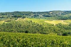 Vineyard in Passignano in Chianti region. Tuscany. Italy. Vineyard in Passignano in Chianti region. Tuscany landscape. Italy royalty free stock photos