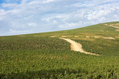 Vineyard with track on hill, South Africa Stock Photos