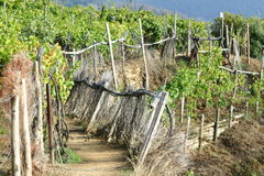 Vineyard path Royalty Free Stock Photos