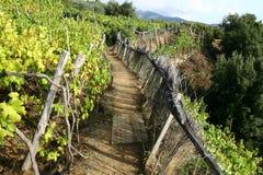 Vineyard path Stock Photos