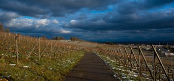 Path through the vineyards in Alsace. Vineyard path near Mittelbergheim in Alsace in France royalty free stock photo
