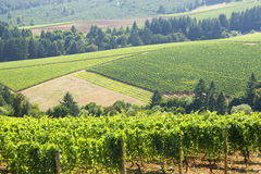Vineyard patterns in the dundee hills Stock Photos