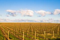 Vineyard patterns Stock Photos