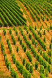 Vineyard patterns, Sancerre, France stock photo