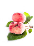 Vineyard peaches with sheets. On a white tray royalty free stock photos