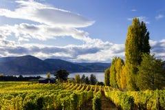 Vineyard Penticton Okanagan Valley Royalty Free Stock Photo