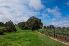 Vineyard. In Perth,Australia. blue sky Royalty Free Stock Photography