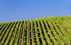 Vineyard in Pfalz, GermanyGermany. Vineyard with blue skies in Pfalz, Germany Royalty Free Stock Photography