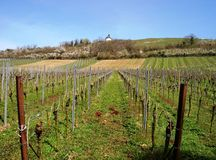Vineyard in the Pfalz in spring. A vineyard rises flat on the hill. Upper chapel against blue sky in spring Royalty Free Stock Photo