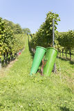 A vineyard with picking baskets in the foreground, Baden Württemberg, Germany Stock Images