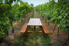 Vineyard with picnic table Stock Image
