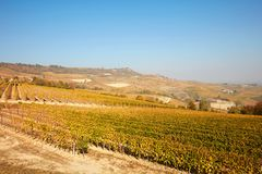 Vineyard and Piedmont hills in autumn with yellow leaves in Italy Royalty Free Stock Photos