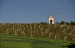 Vineyard in Piedmont in Italy Stock Photography