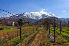 Vineyard at Piemonte. Vineyard, in the early spring, in Piemonte on the foot of the Bisalto near Peveragno, Cuneo, Italy royalty free stock photography