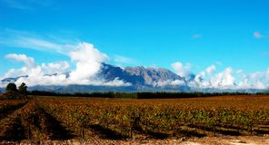Vineyard on Plaisir de Merle Royalty Free Stock Photo