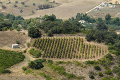 Vineyard plantation - bird's eye view. Spain. Small plantation in the dried scenery of the Spain interior (central Andalusia) - bird's eye view stock photos