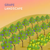 Vineyard Plantation of Grape-Bearing Vines Stock Photos
