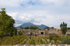 Vineyard in Pompeii Royalty Free Stock Image