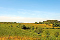 Vineyard and Pond Royalty Free Stock Image