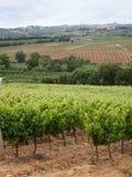 Vineyard Portrait. Private portuguese grape vineyard landscape Stock Images