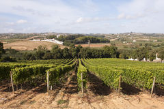 Vineyard in Portugal Stock Images
