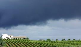 Vineyard at Portugal. Royalty Free Stock Photo