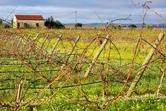 Vineyard  portuguese farm. Stock Image