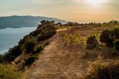 Vineyard position, peninsula of Peljesac, Orebic, Dalmatia, Croatia. Photo of Vineyard position, peninsula of Peljesac, Orebic, Dalmatia, Croatia stock photography