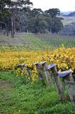 Vineyard post ends in McLaren Vale Royalty Free Stock Photos