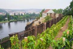 Vineyard in Prague Royalty Free Stock Images