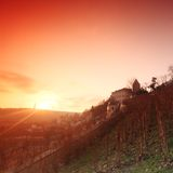 Vineyard in prague Royalty Free Stock Photography