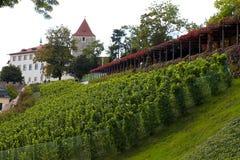 Vineyard of Prague Royalty Free Stock Photos