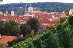Vineyard of Prague Royalty Free Stock Image