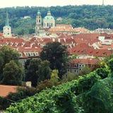 Vineyard of Prague Royalty Free Stock Photo