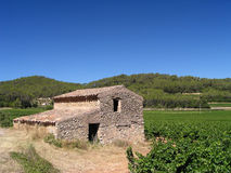 Vineyard in Provence. With ancient building (France Royalty Free Stock Images