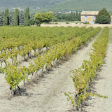 Vineyard in Provence, France Stock Photography