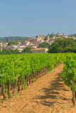 Vineyard in Provence ( France) Stock Images