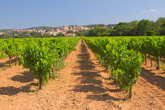 Vineyard in Provence ( France) Royalty Free Stock Photo