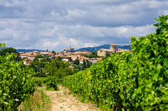 Vineyard in provence Stock Photos