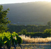 Vineyard in Provence. Scenic view of a vineyard in Provence, France royalty free stock photo