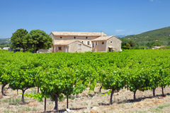 The vineyard in  Provence Stock Photos