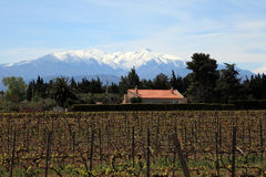 Vineyard and Pyrenees, France Royalty Free Stock Photo