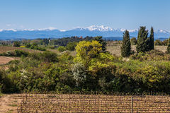 Vineyard and Pyrenees. Sunny day with vineyard on the foreground, some green trees and white peaks of Pyrenees near Carcassonne, France royalty free stock photos