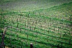 Vineyard in Radebeul royalty free stock images
