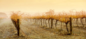 Vineyard Rain Royalty Free Stock Photos