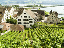 Vineyard in Rapperswil. In background big zurich lake Stock Photo