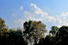 Vineyard and Recreation Park Lohrberg - Trees in the Park with Clouds stock image