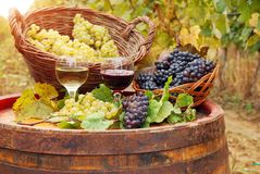 Vineyard with red and white wine stock images