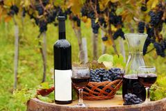 Vineyard with red wine bottle. And wineglasses Stock Photography